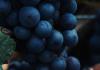 Best Kind of Wine for Non-Wine Drinker