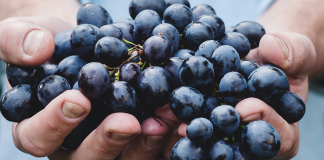How Long Does it Take to Make Wine?