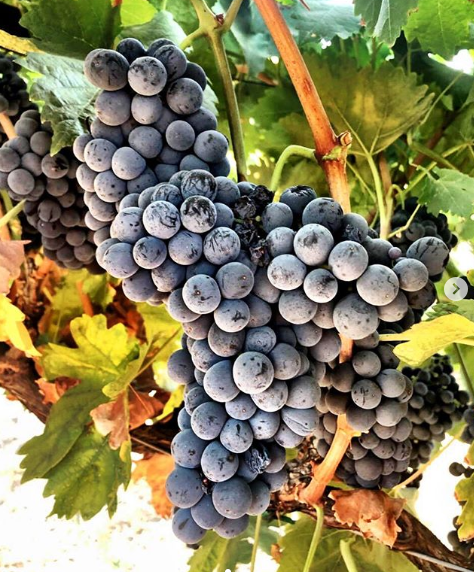 Supplies You Need to Make Homemade Wine