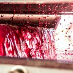 Yeast and Winemaking: Everything You Need To Know